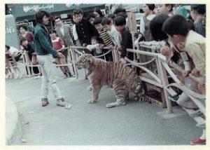 十条駅前ロータリーにトラが!