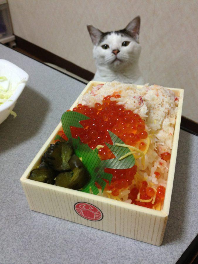 タイトル:食べたいにゃん ゆきさん
