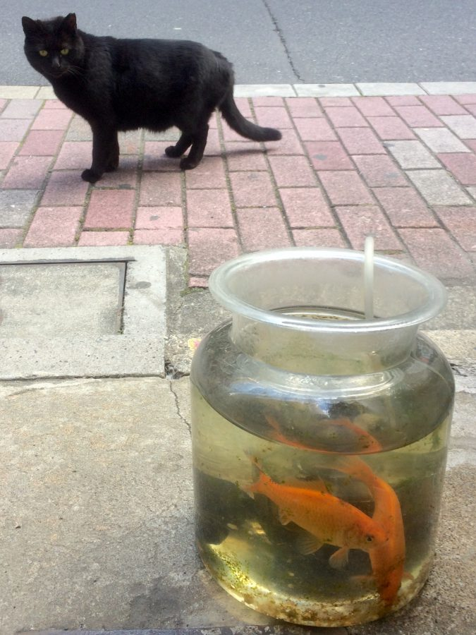 タイトル:招き猫? 錦織 圭吾さん